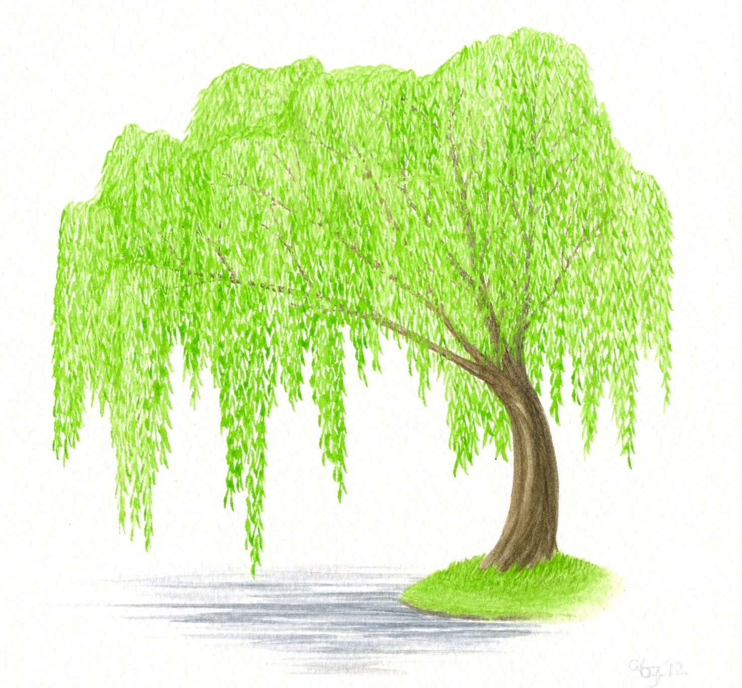 Weeping Willow Tree Clipart.