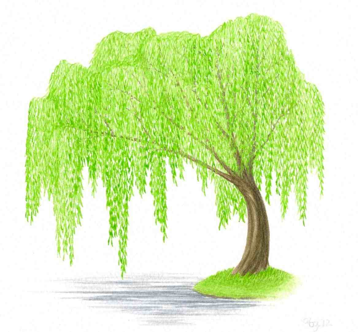 193 Willow Tree free clipart.