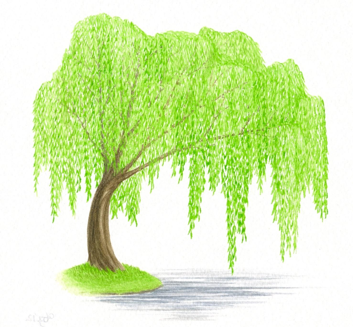 willow clip art 10 free Cliparts   Download images on ...