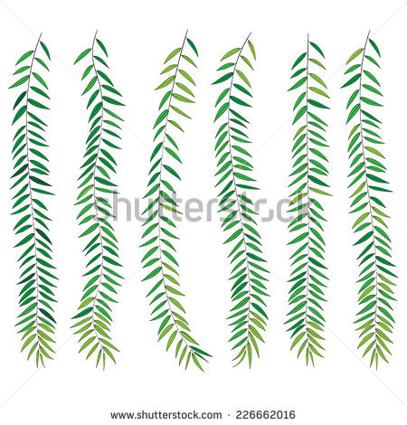 Willow Leaf Stock Images, Royalty.