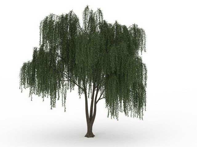 Willow Png, png collections at sccpre.cat.