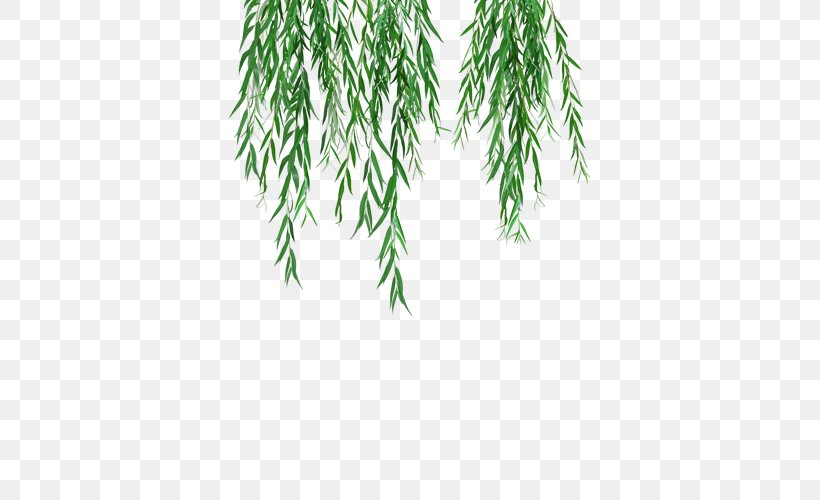 Weeping Willow Tree Branch Clip Art Leaf, PNG, 500x500px.