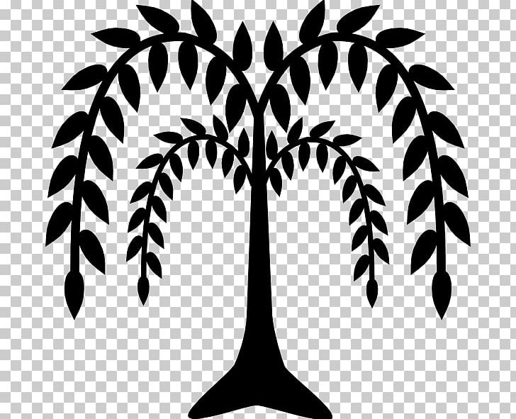 Weeping Willow Tree Drawing PNG, Clipart, Arecales, Art.