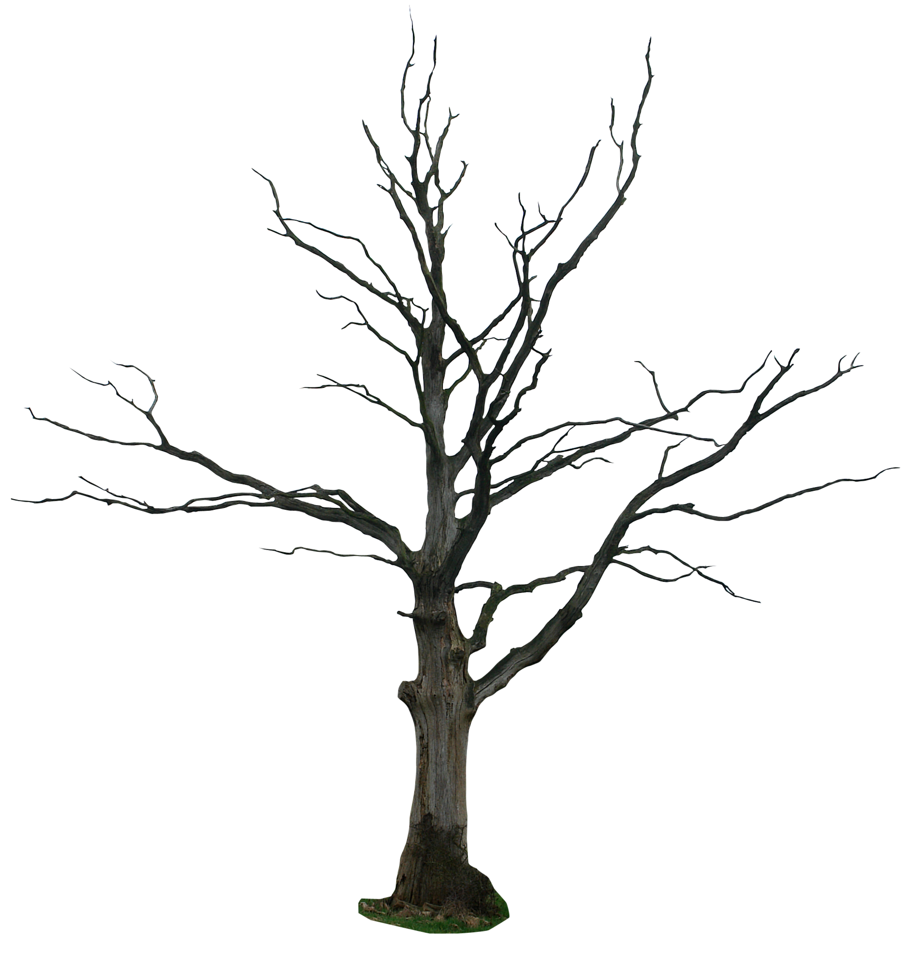Top Primitive Willow Tree Clip Art Library » Free Vector Art, Images.