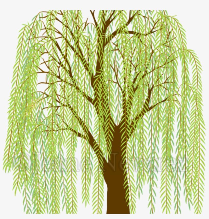 Willow Tree Clipart Art Jeane Nevarez Willow Tree Willow.