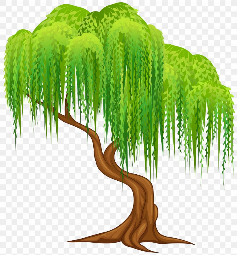 Weeping Willow Tree Salix Alba Wall Decal Clip Art, PNG.