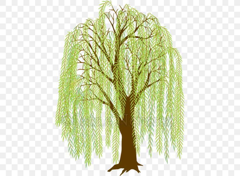 Weeping Willow Drawing Clip Art Tree Image, PNG, 444x600px.