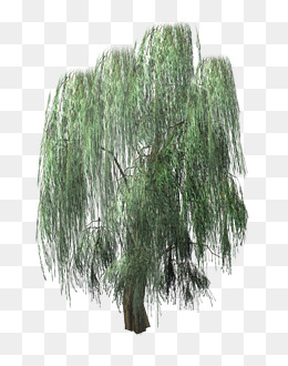 Willow Tree PNG HD Transparent Willow Tree HD.PNG Images.