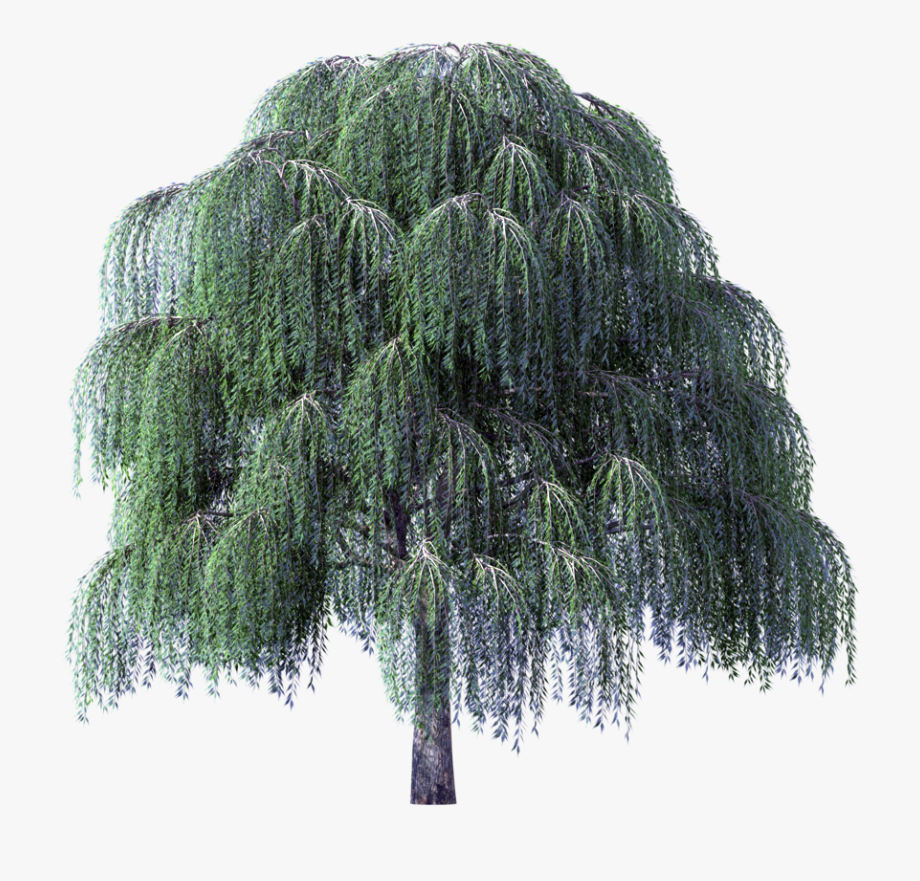 Tree Clipart Weeping Willow River.