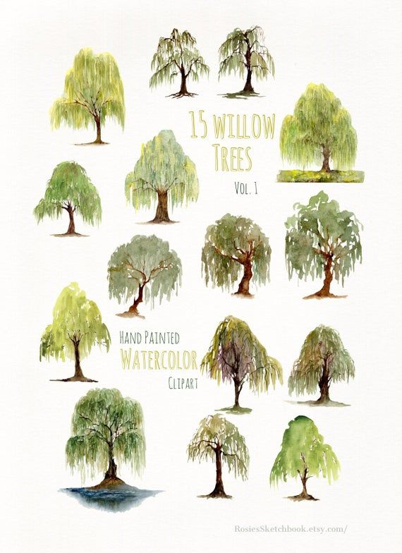 Hand Painted Willow Tree Watercolor Clipart.