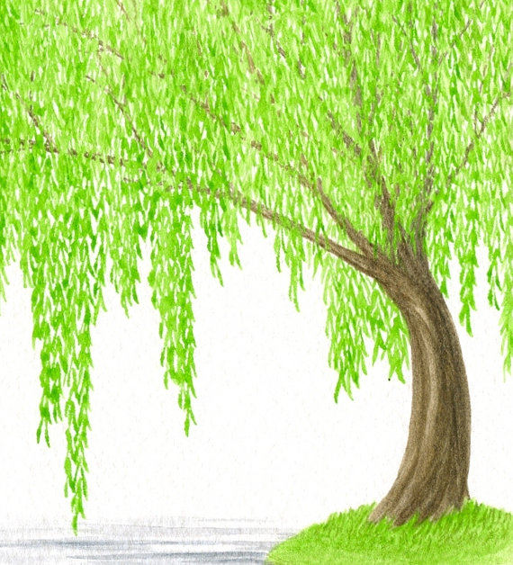 Original Painting, Tree Watercolor, Weeping Willow Tree and.