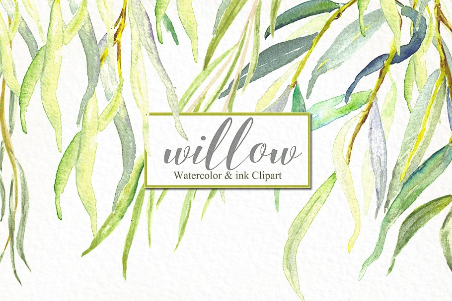 Willow branches watercolor ~ Illustrations ~ Creative Market.