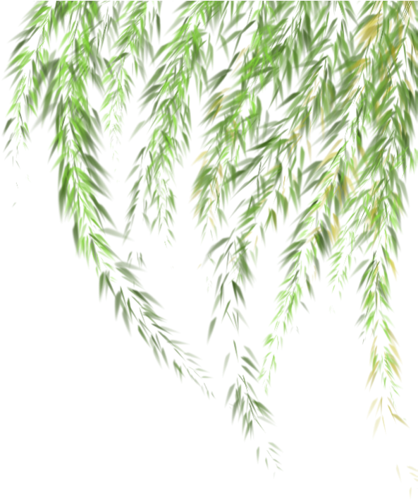 willow #tree #leaves #ftestickers.