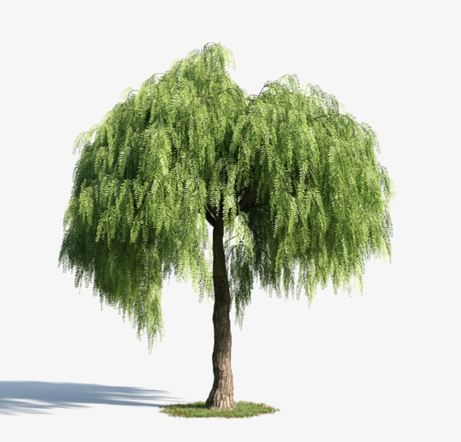 Green Tree Material, Tree Clipart, Plant, Green Willow PNG.