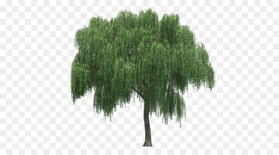 Oak Tree png download.