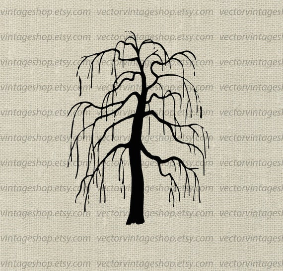 Weeping Willow Tree Vector Clipart, Bare Tree Silhouette Clip Art,  Commercial Use Halloween Autumn Illustration, Printable Art.
