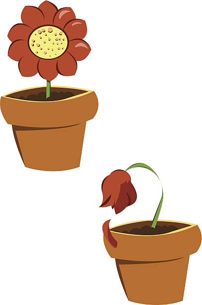 Best Wilted Flower Illustrations, Royalty.