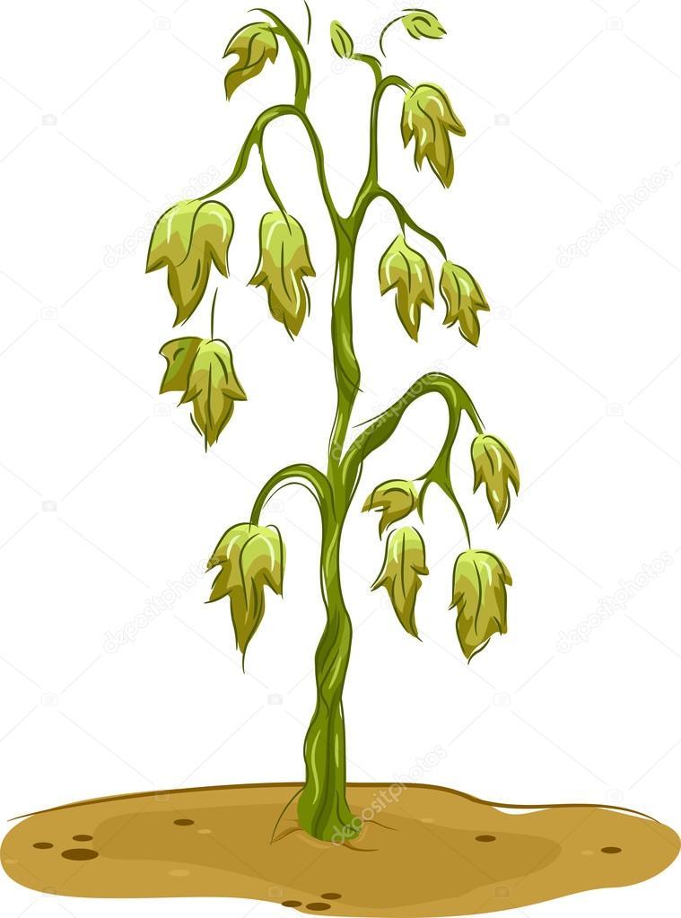 Clipart: dead plants.