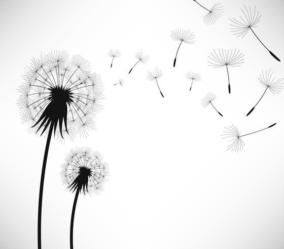 Dandelion Wind Blow Flower..