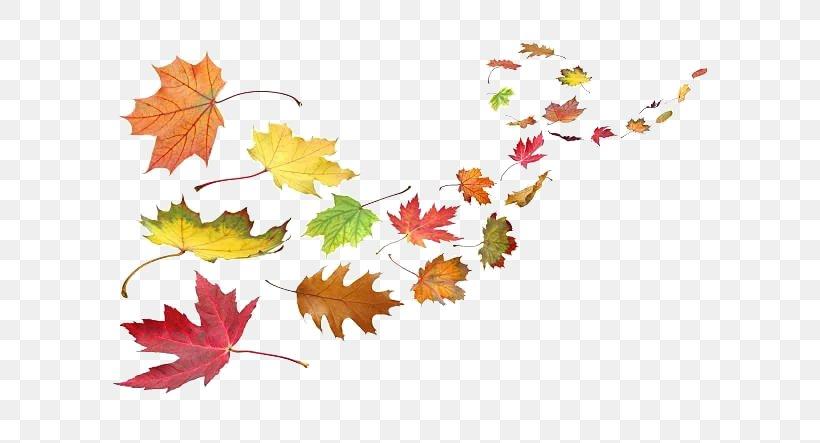 Autumn Leaf Color Wind Clip Art, PNG, 612x443px, Autumn Leaf.