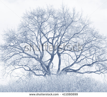 Photo Winding Branches Tree Against Sky Stock Photo 392992540.