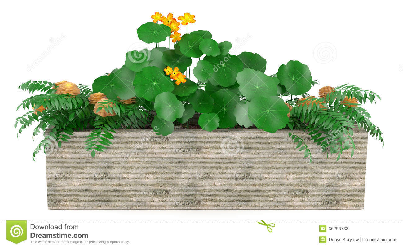 Window flowers in the box stock illustration. Illustration of.