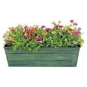 flowers, plants & gardening 5.