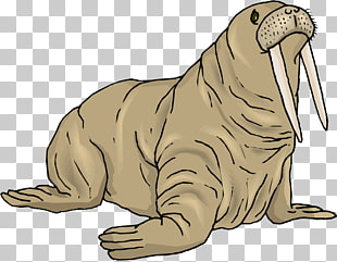 24 walrus Cliparts PNG cliparts for free download.