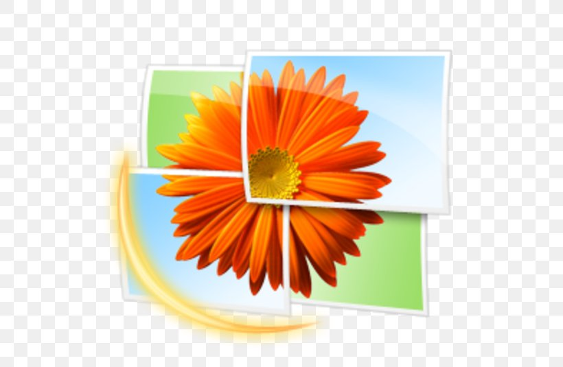 Windows Photo Gallery Image Viewer Windows Live Gallery.