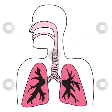 Human Respiratory System Diagram stock vector.