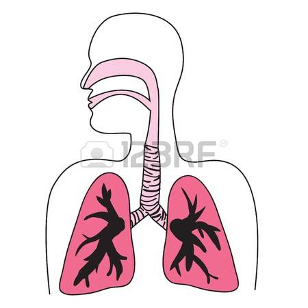Windpipe Stock Photos Images. Royalty Free Windpipe Images And.
