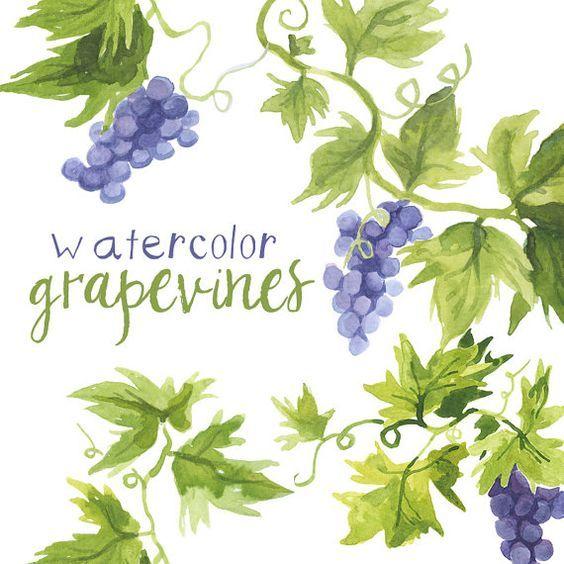 Watercolor Grapevines Clipart, Grape vines art, vineyard.