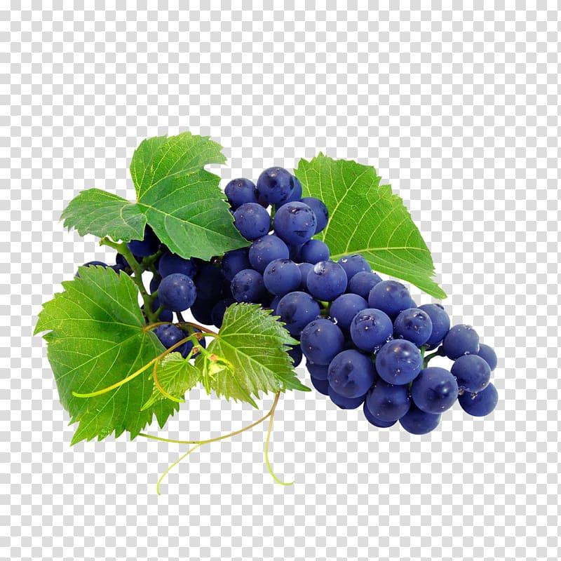 Grape fruit illustration, Cabernet Sauvignon Cabernet Franc.