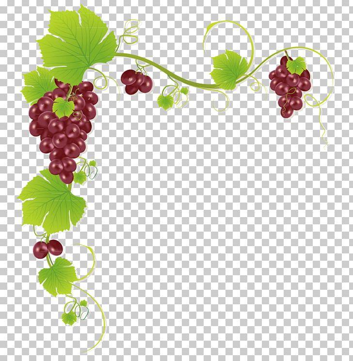 Common Grape Vine Wine Juice Muscadine Grape PNG, Clipart.