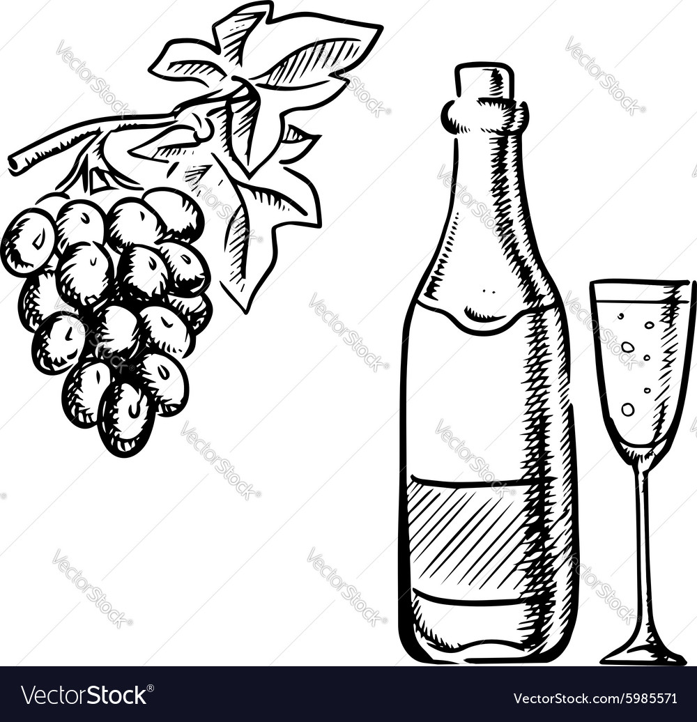 Wine bottle glass and grapes sketch.