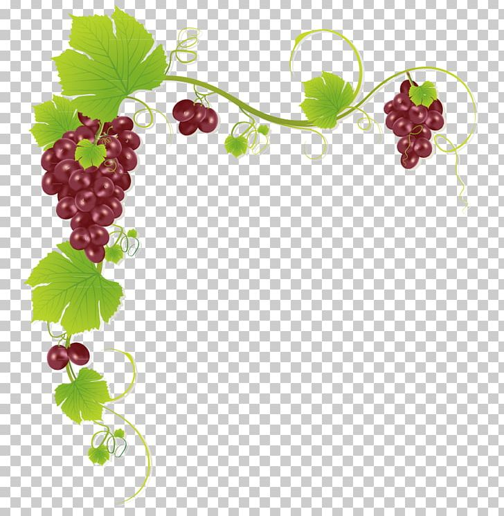 Common Grape Vine Wine Juice Muscadine Grape PNG, Clipart, Border.