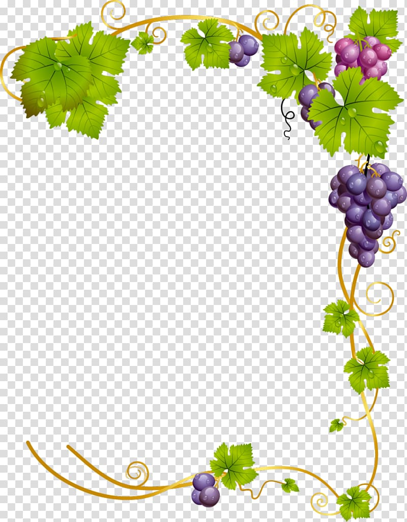 Grapes , Common Grape Vine Wine, green frame transparent.