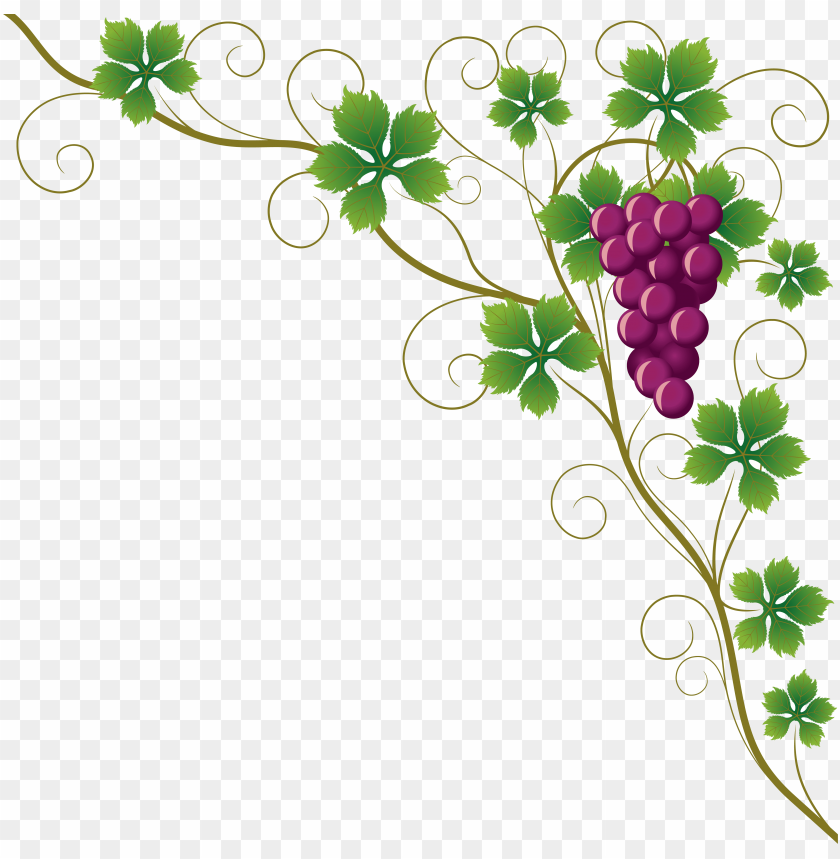common grape vine grape leaves wine clip art.