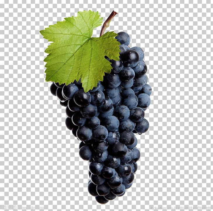 Common Grape Vine Wine Isabella Stock Photography PNG.