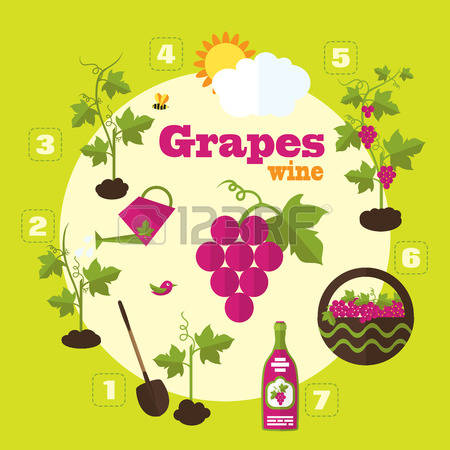 21,192 Grapes Wine Cliparts, Stock Vector And Royalty Free Grapes.