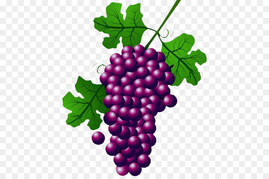 The best free Grape vine clipart images. Download from 276.