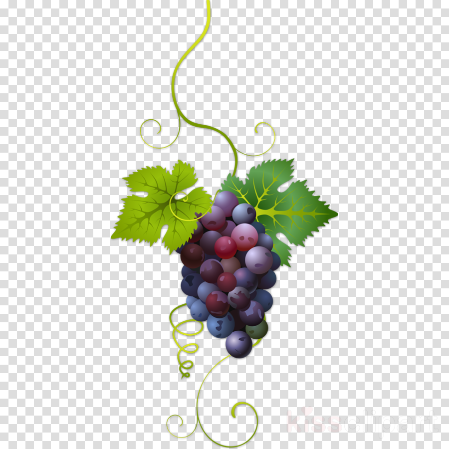 Wine, Grape, Fruit, transparent png image & clipart free download.