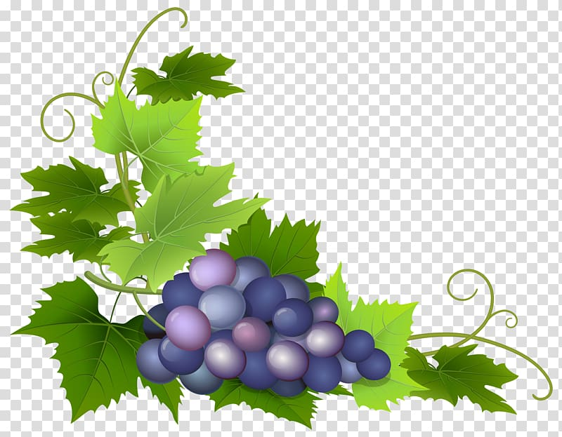 Common Grape Vine Wine Grape leaves , Grapes transparent background.
