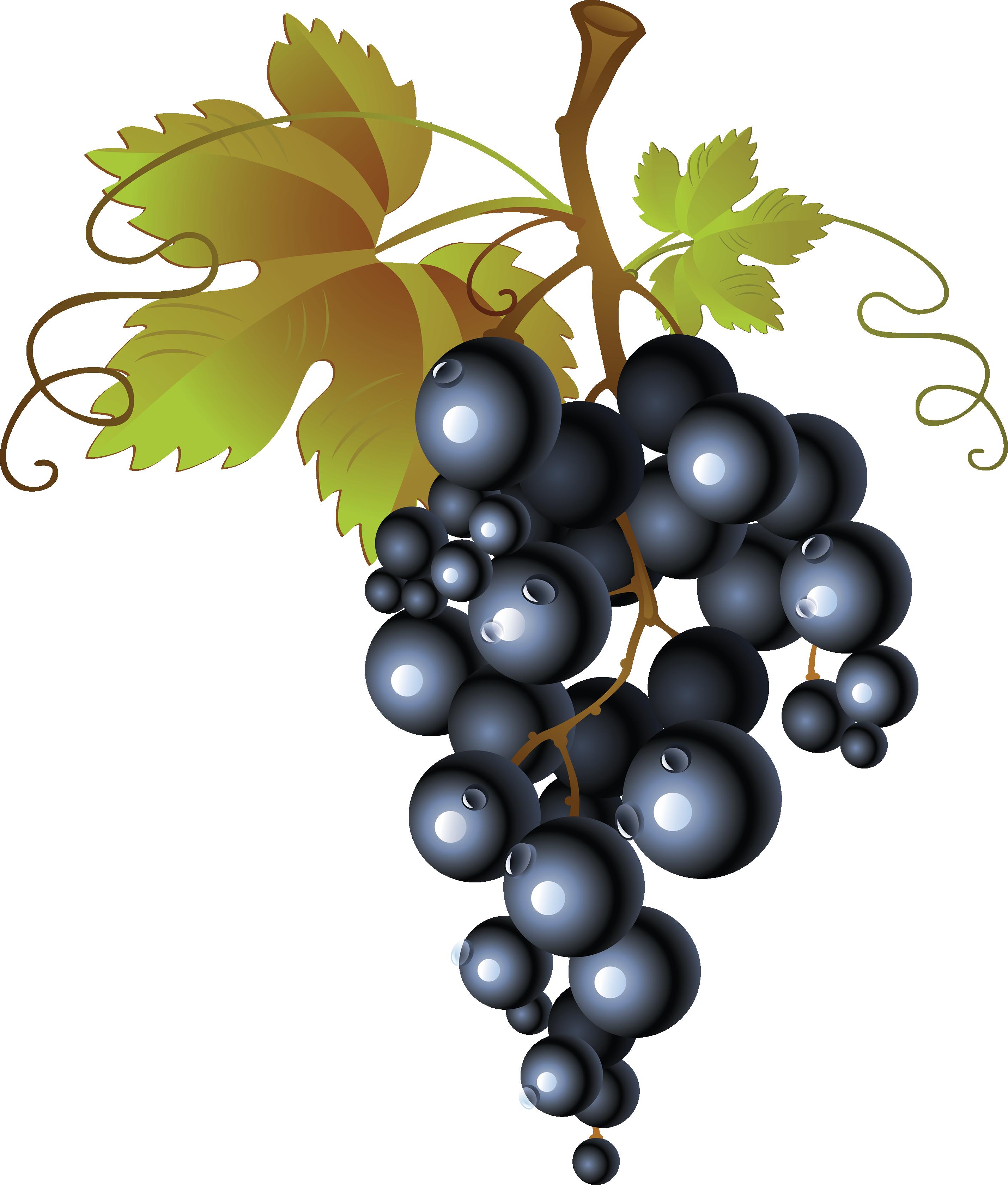 Uvas Png Transparent Background Grapes Clipart Png.