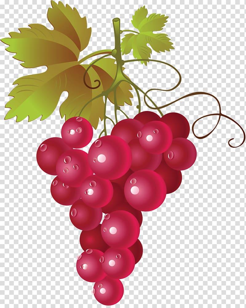 Red Wine Common Grape Vine , grape transparent background.