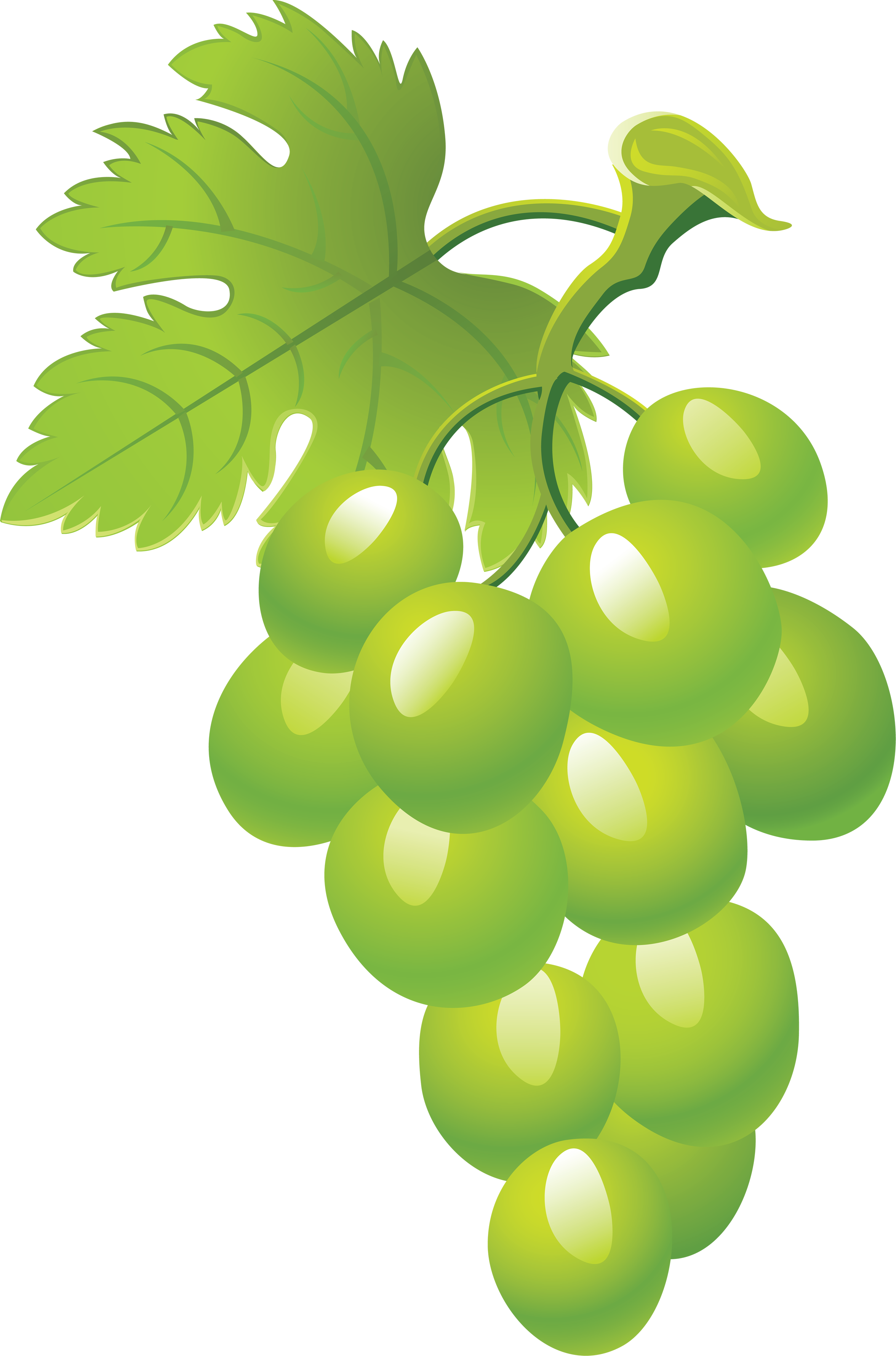 Grapes clipart high re, Grapes high re Transparent FREE for.