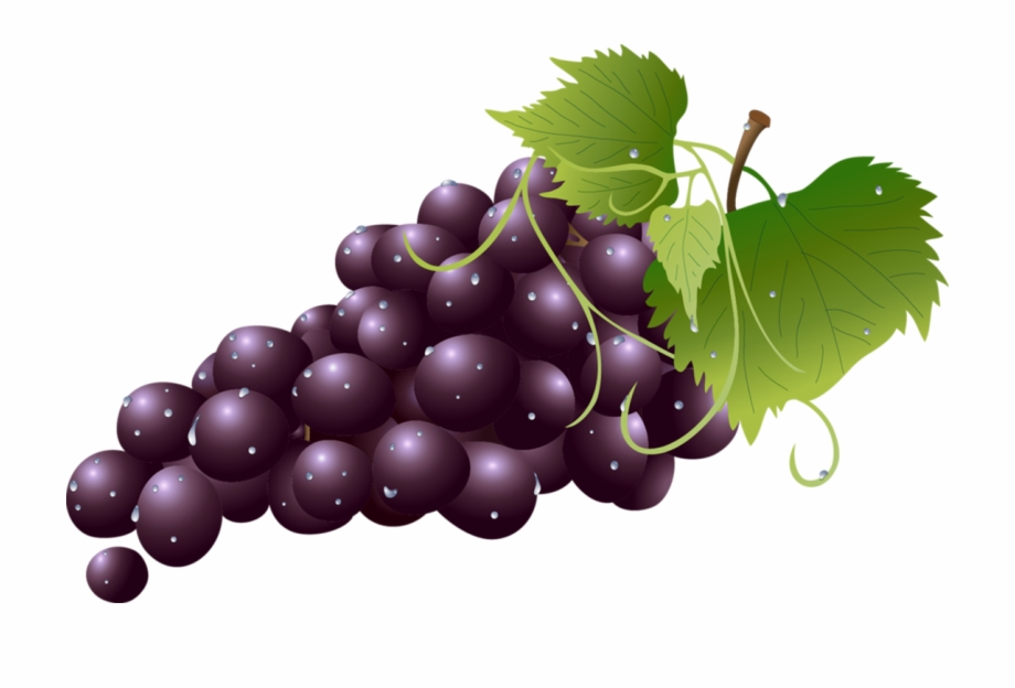 Grape Kyoho Wine Grapes Clipart.