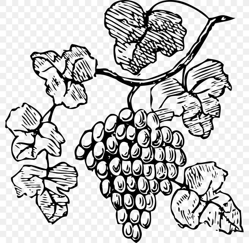Common Grape Vine Wine Decorative Borders Clip Art, PNG.