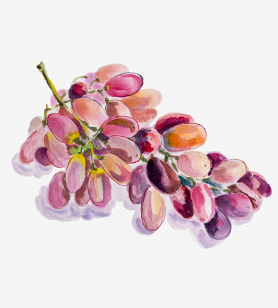 Wine Growers Pictures Clip Art, Vector Images & Illustrations.