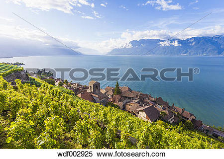 "Stock Image of ""Switzerland, Lavaux, Lake Geneva, wine."